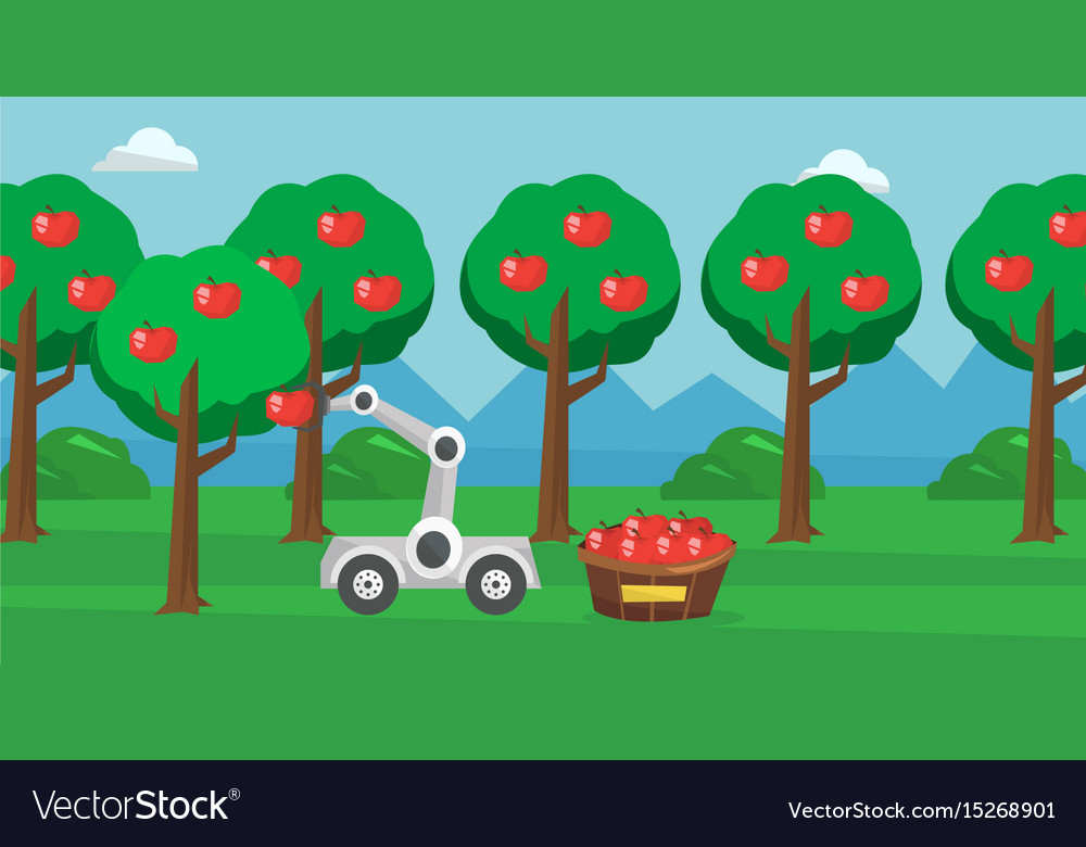 Robot picking apples at harvest time vector image