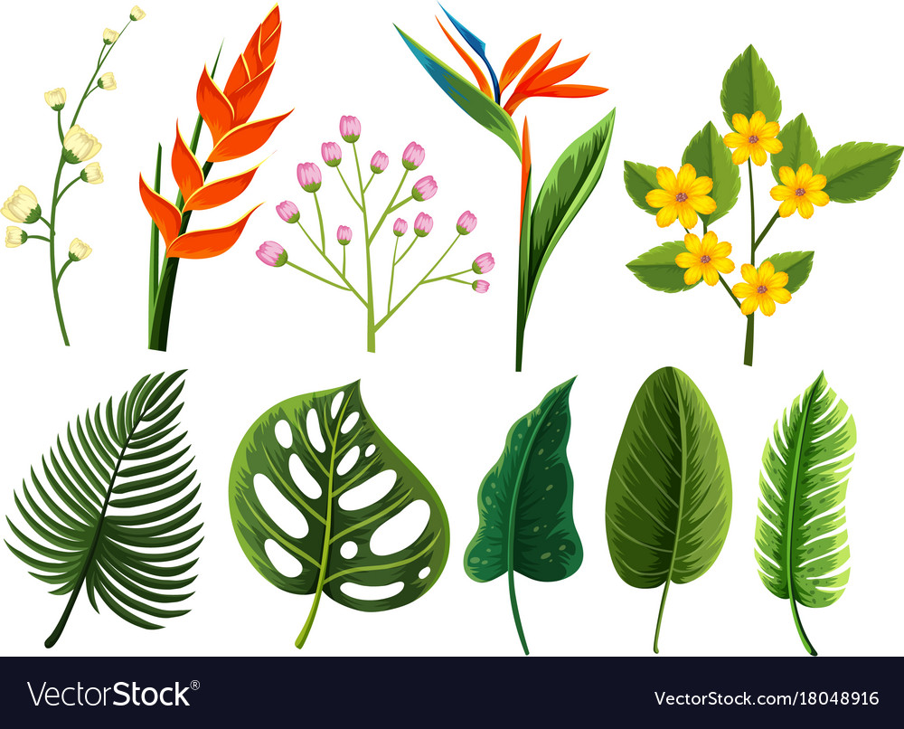 Different types of flowers and leaves royalty free vector different types of flowers and leaves vector image izmirmasajfo