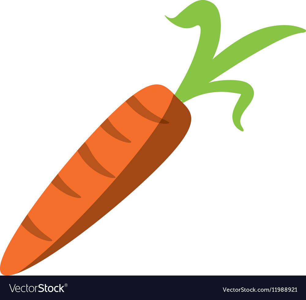 Fresh carrot vegetable healthy icon