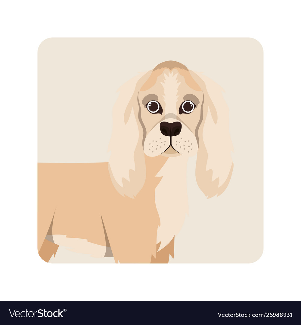 Cute Cocker Spaniel Ingles Dog On White Background