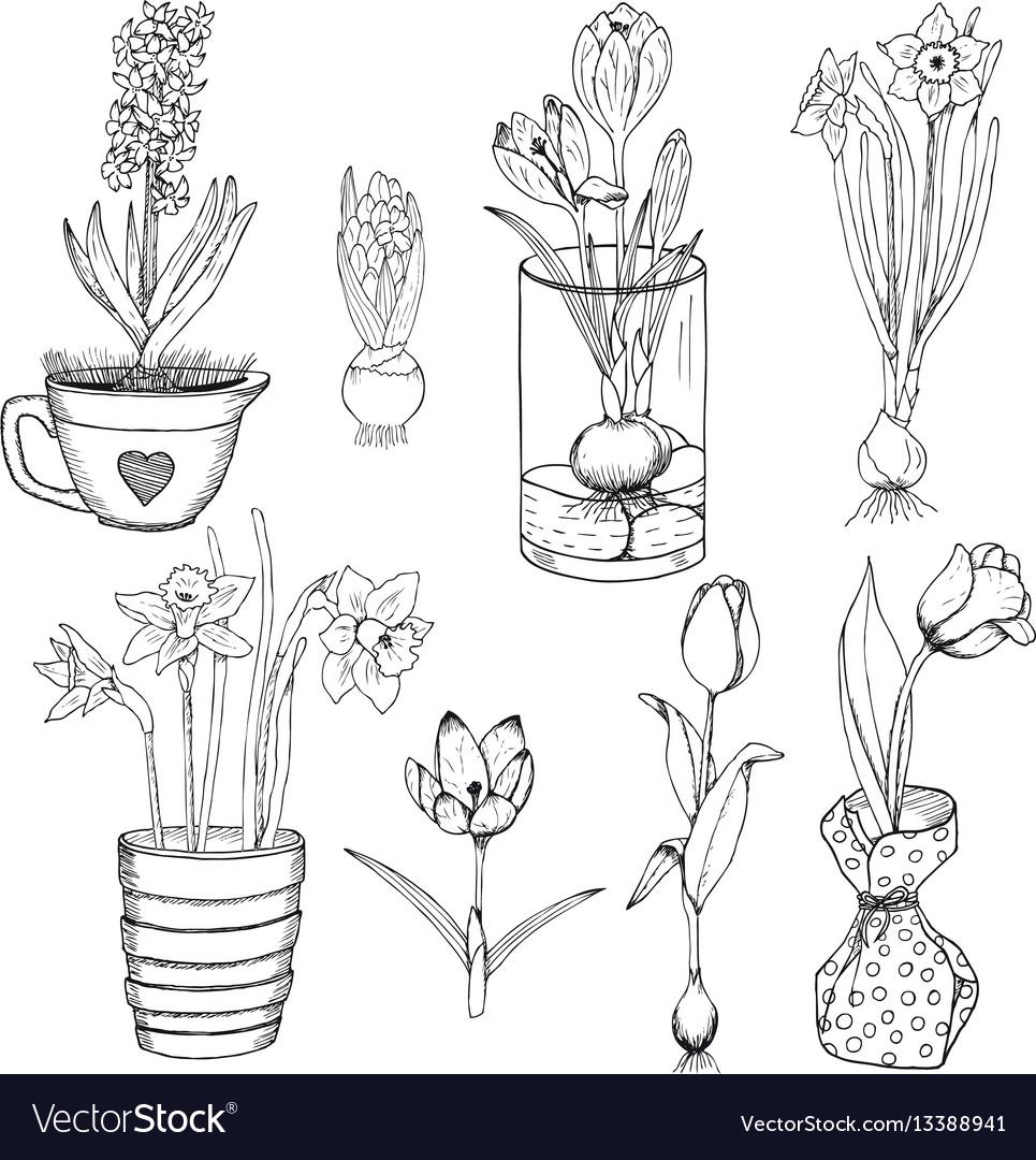 Hand drawn spring flowers set