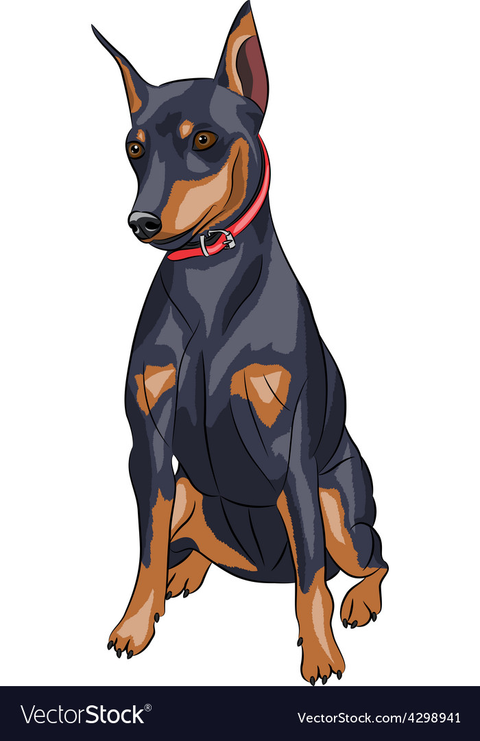 Miniature Pinscher Dog Royalty Free Vector Image