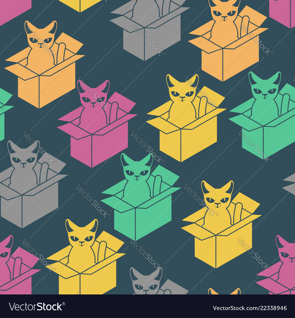 Cat in box pattern pet in cardboard box