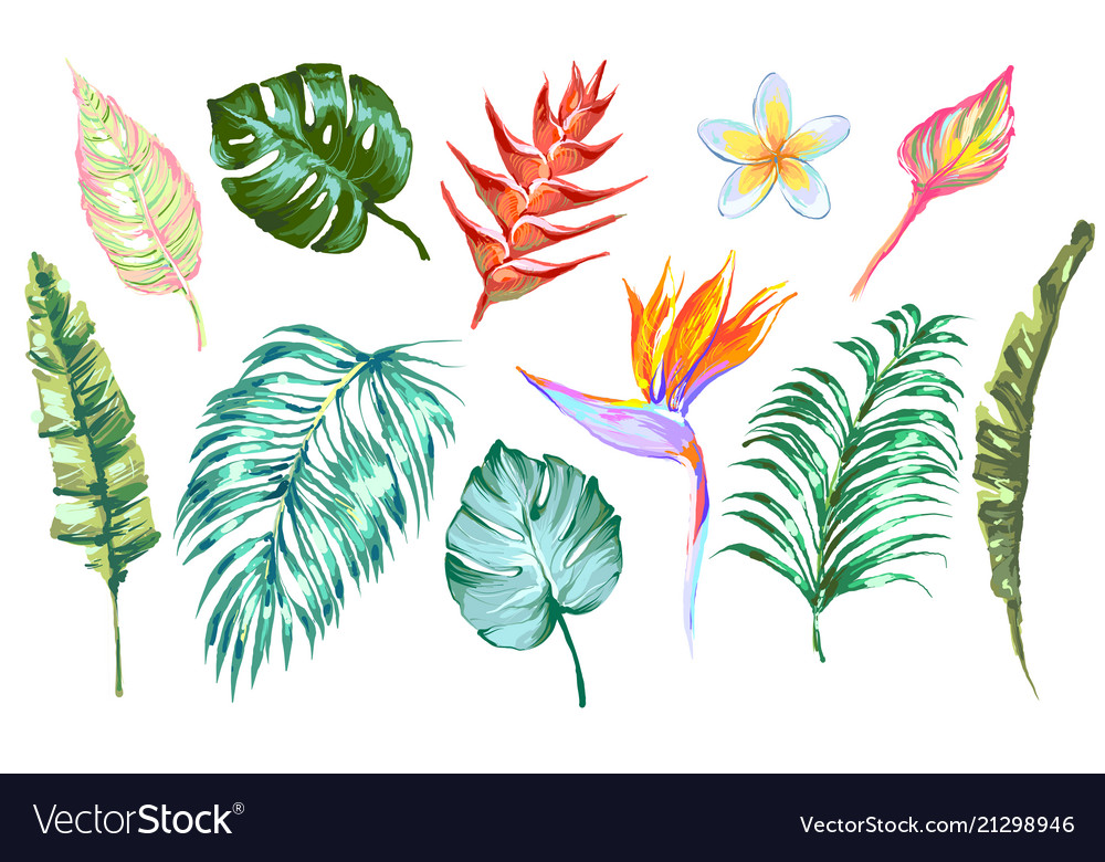 Tropical flowers and leaves design