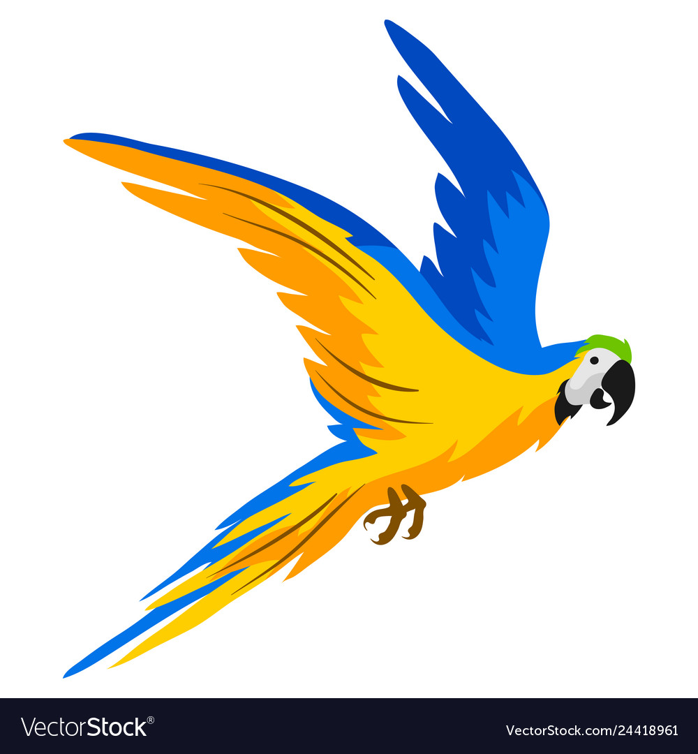 Macaw parrot tropical exotic bird