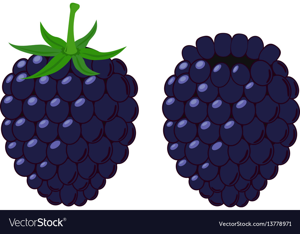 Isolated flat blackberry juicy berry with leaves
