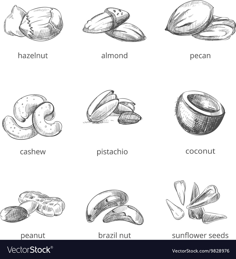 Nuts set in hand drawn style