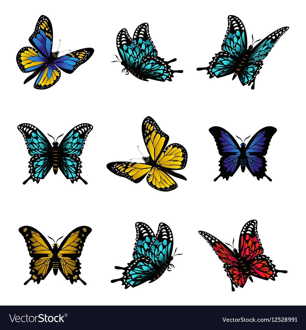 Butterfly of colorful icon set
