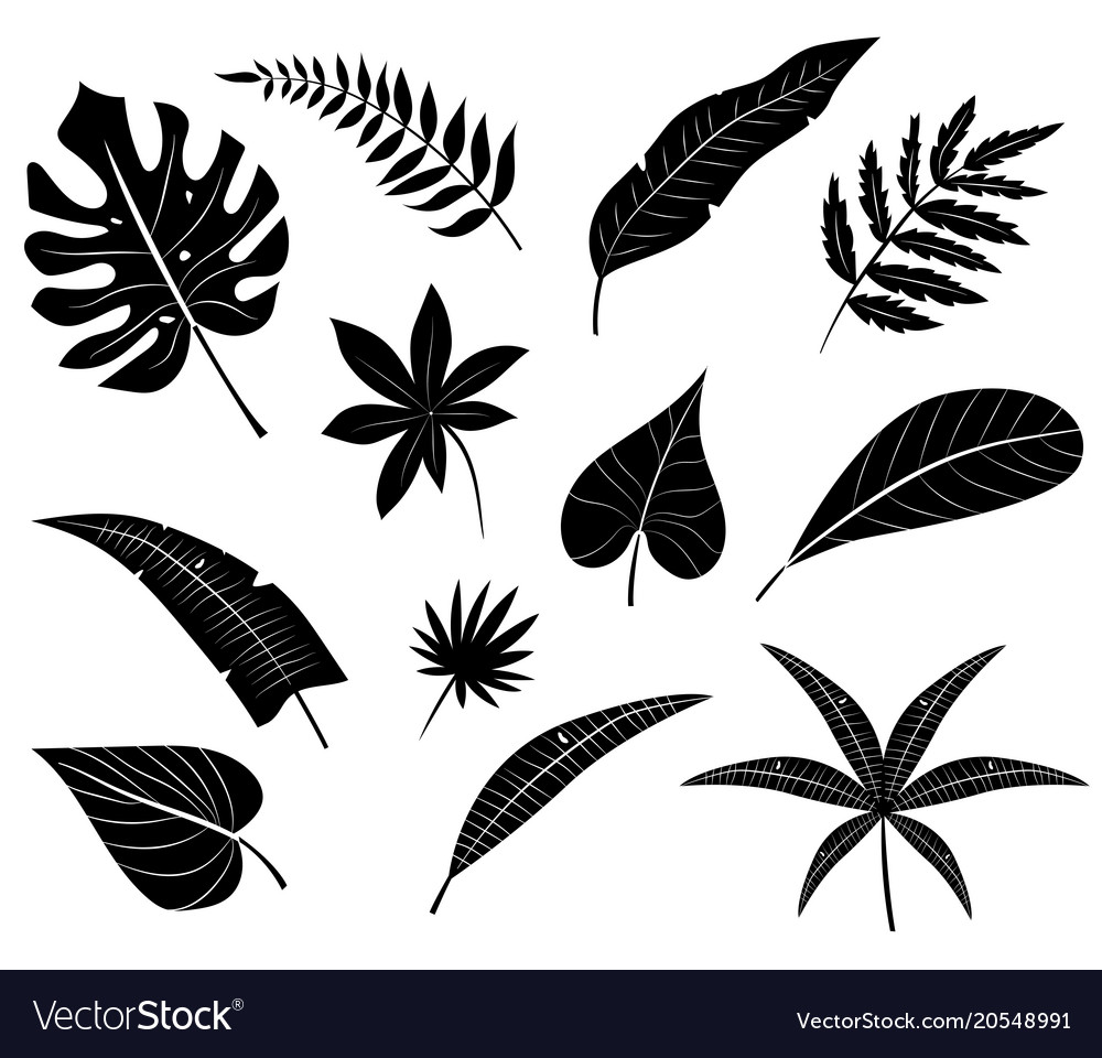 Silhouettes Tropical Leaves Royalty Free Vector Image Every week we add new premium graphics by the thousands. vectorstock