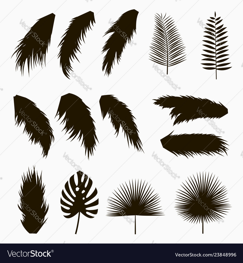 Silhouettes of tropical and palm leaves