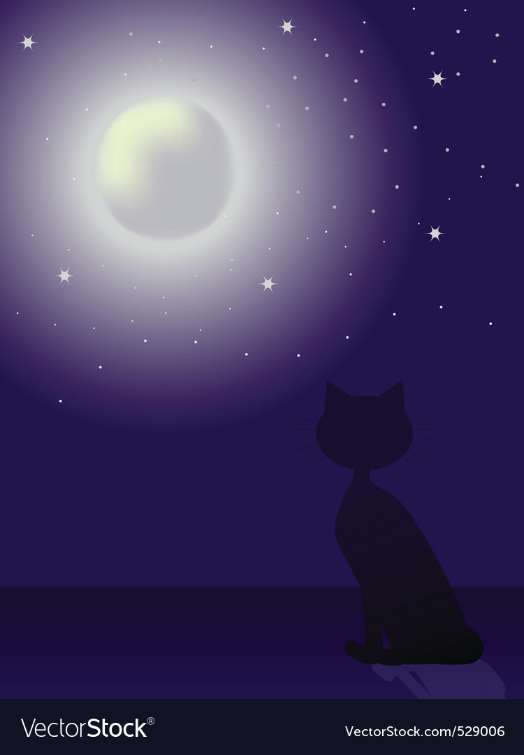 Cat silhouette sitting on a roand looking at th
