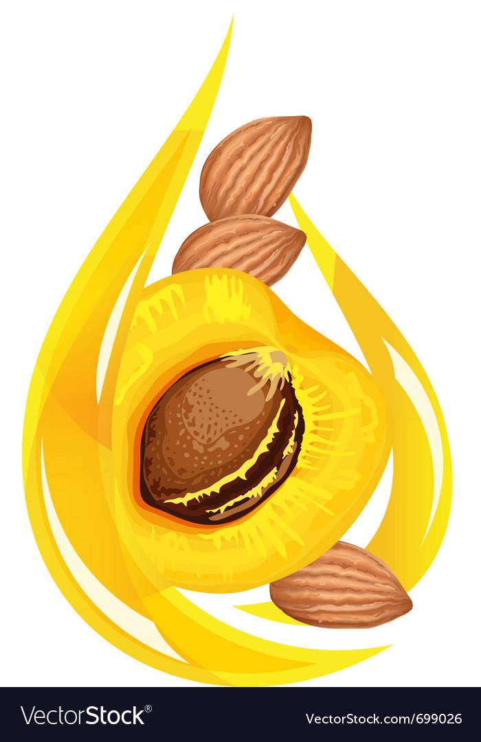 Apricot kernel oil stylized drop