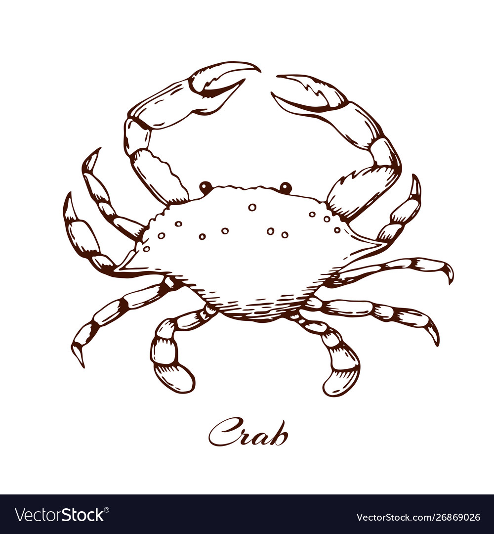 Blue crab seafood design element sea