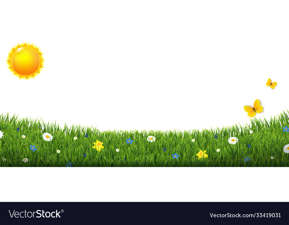 Green grass border with flowers and sun isolated