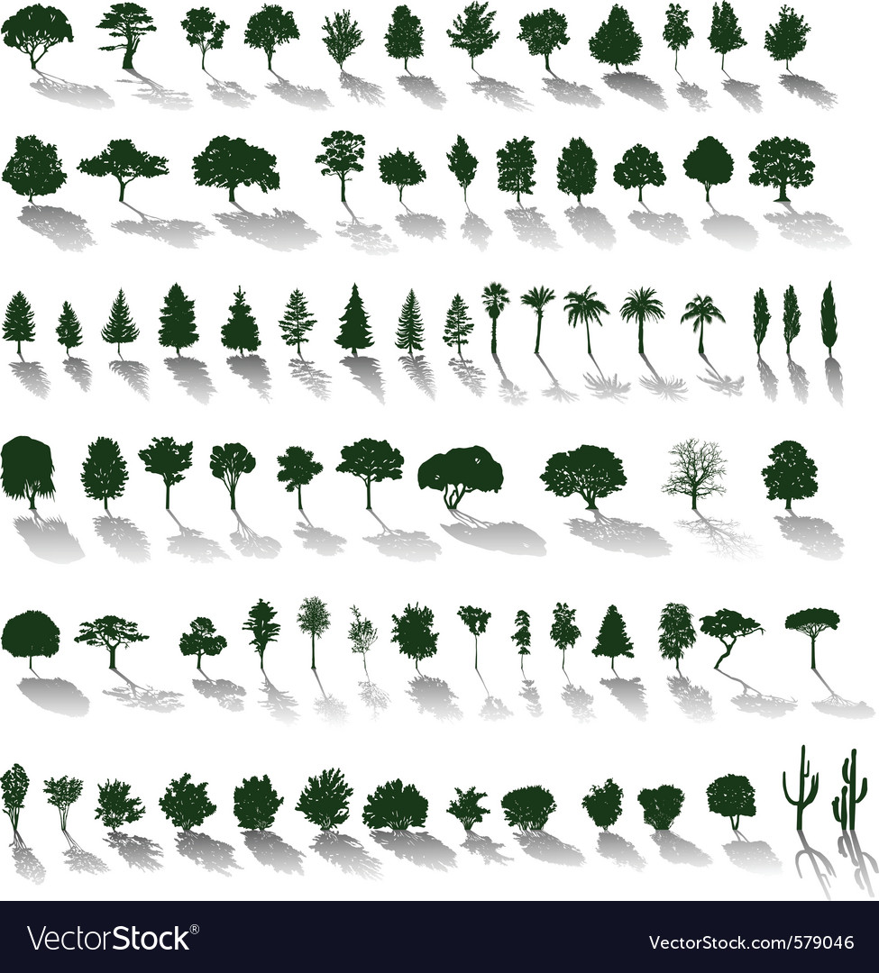 Trees with shadows vector image