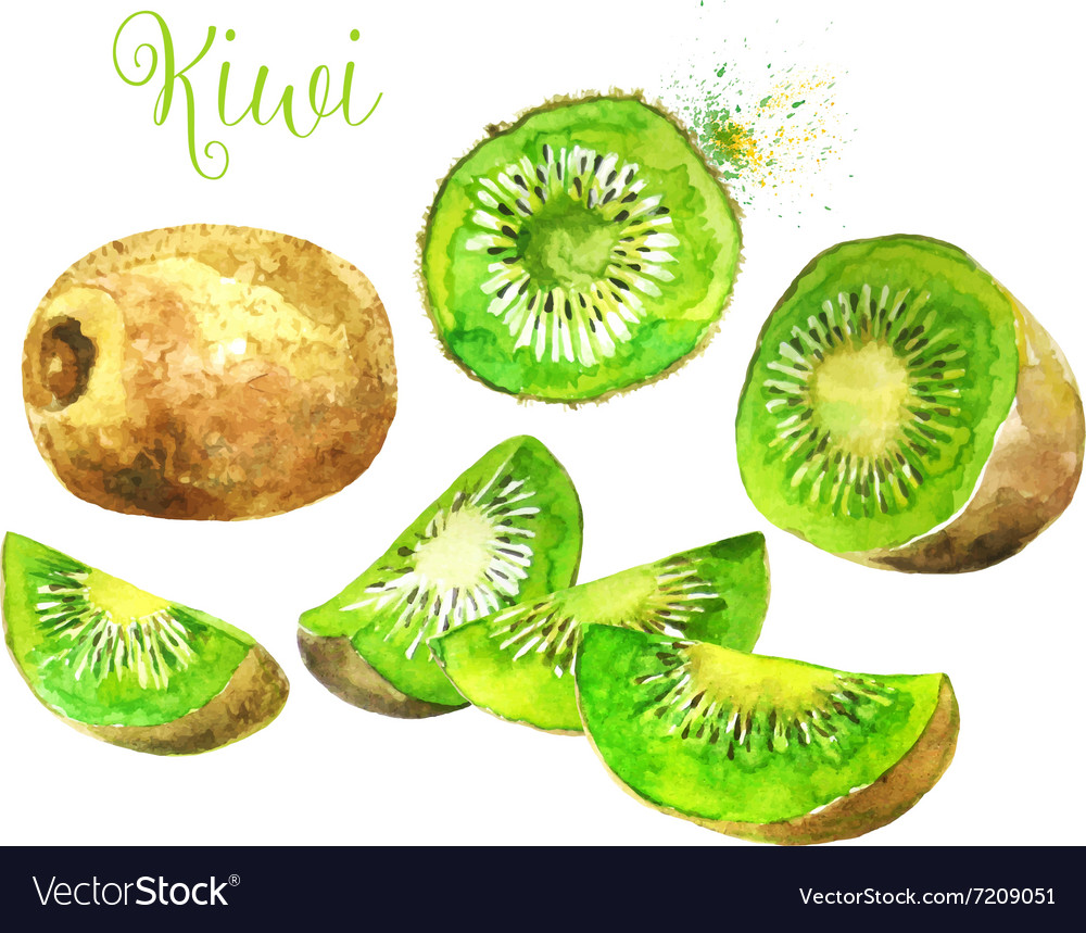Watercolor Kiwi Fruit and his Sliced Segments