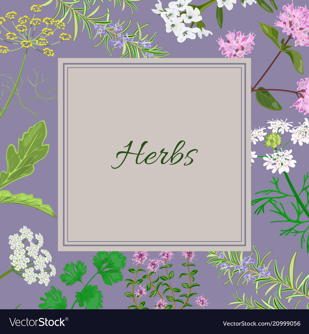 Herbs square converted