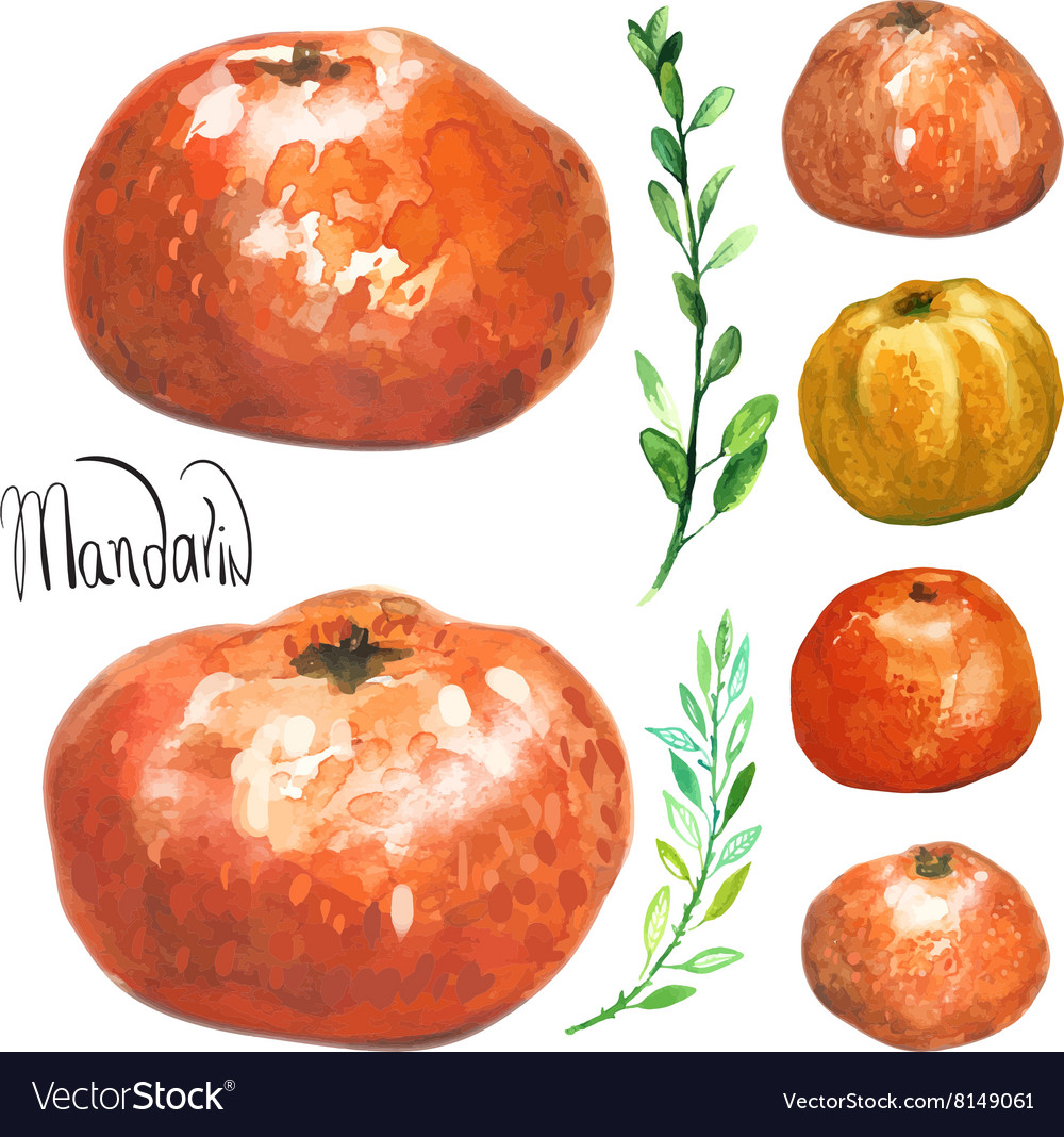 Set of hand drawn watercolor mandarins