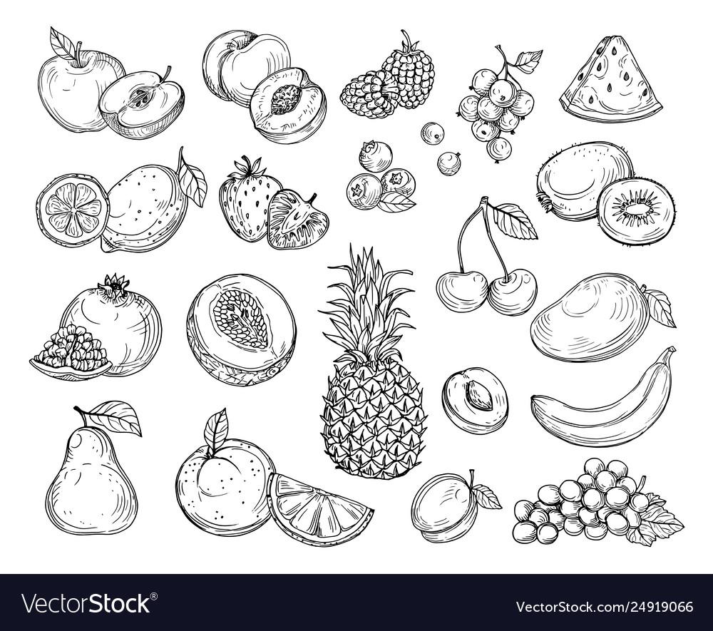 Sketch fruits strawberry melon peach mango
