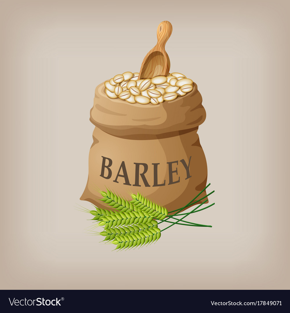 Barley grain seed in the bag