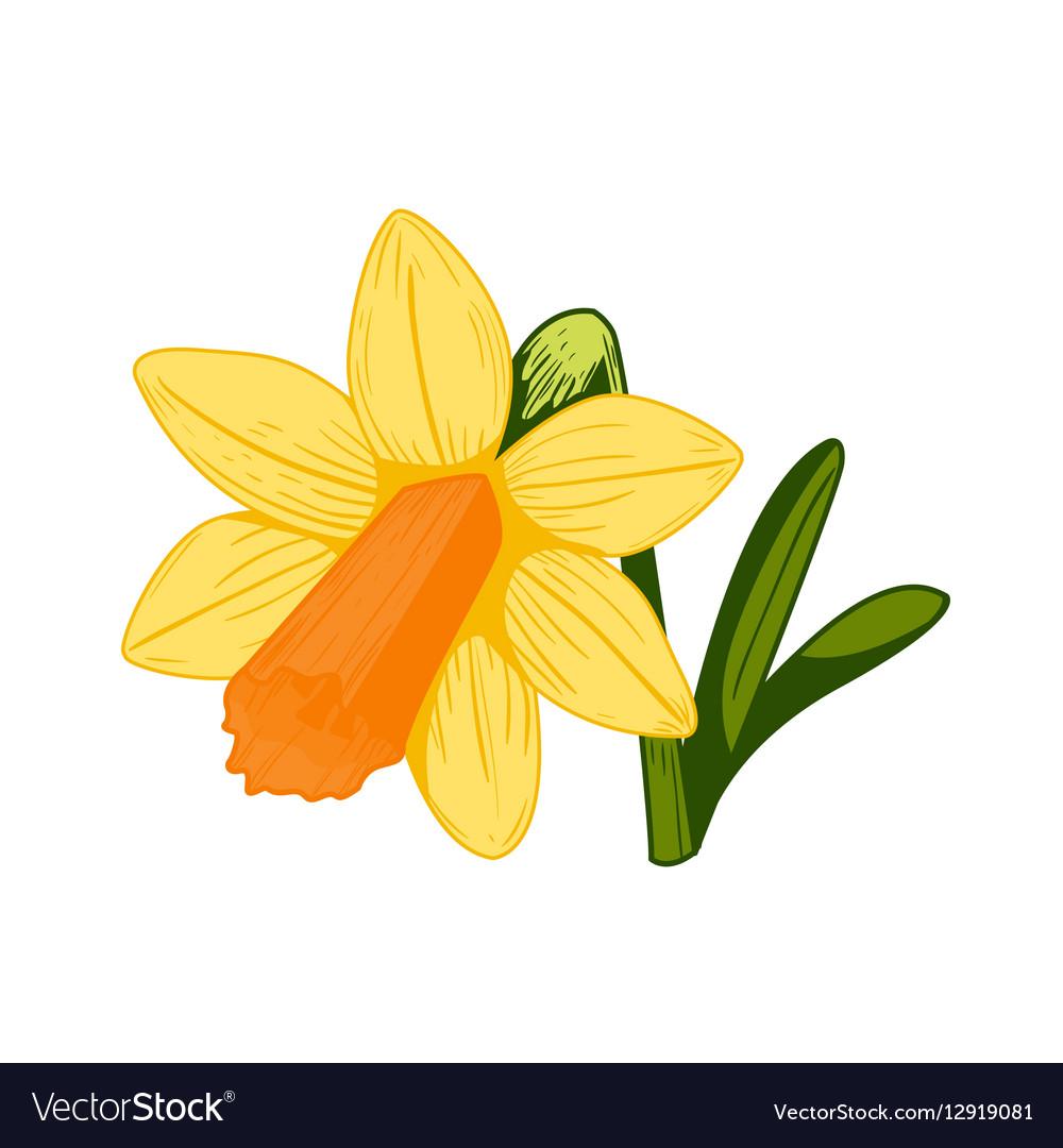 Vintage daffodil flower