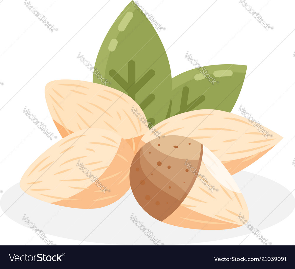 Almond icon flat of almond