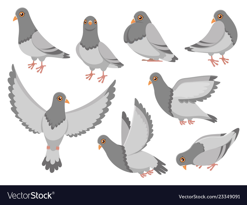 Cartoon pigeon city dove bird flying pigeons and