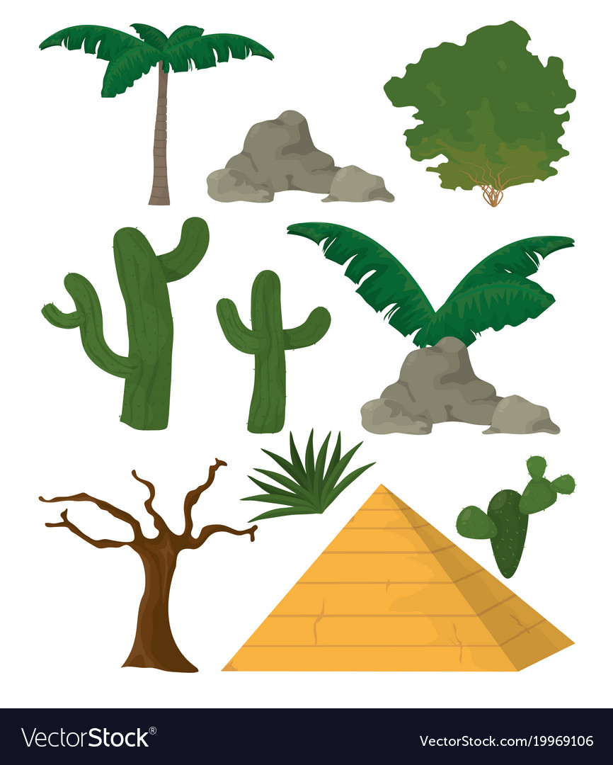 Desert plants and and elements vector image