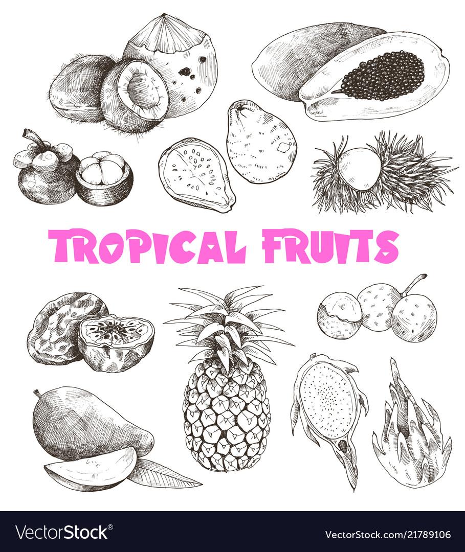 Tropical fruits sketch
