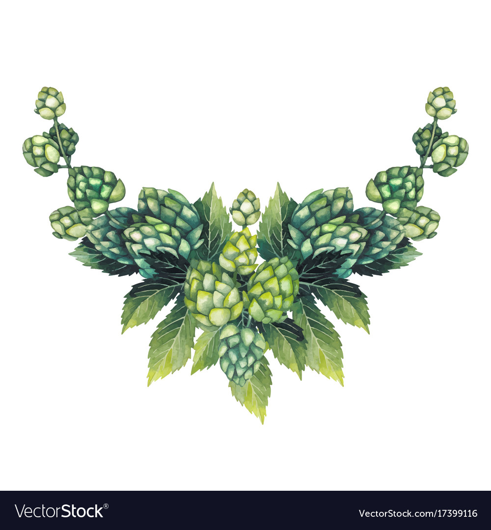 Watercolor hop vignette vector image