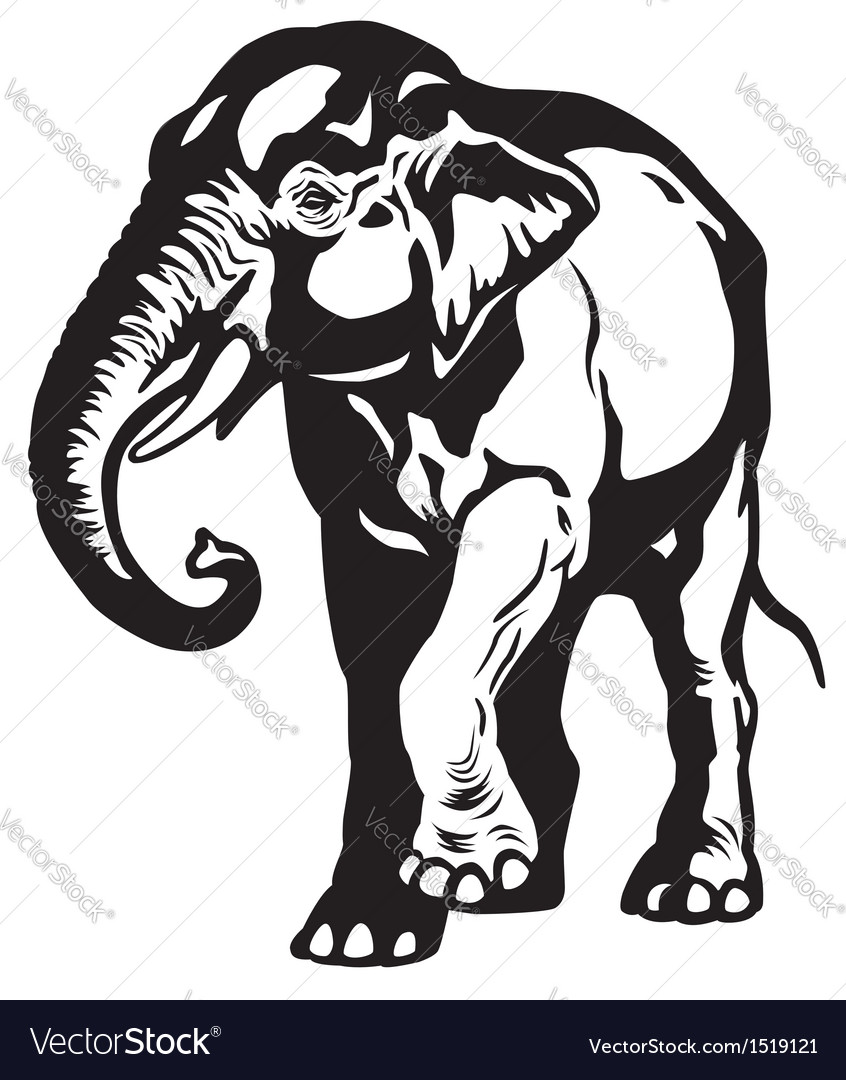 Asian elephant black white