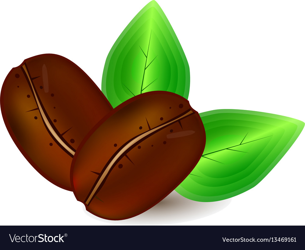 Coffee grains and green leaves vector image