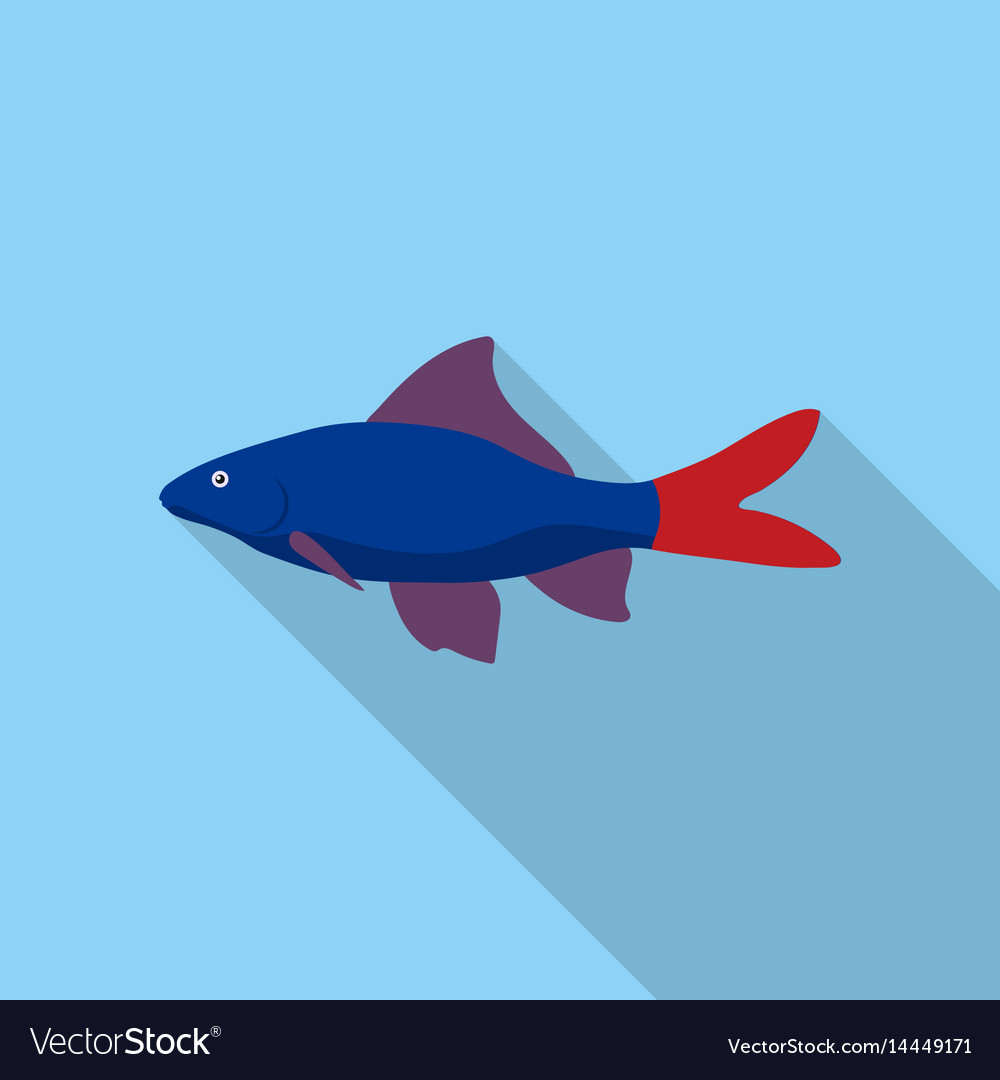 Red Tail Shark Fish Icon Flat Singe Aquarium Fish Vector Image
