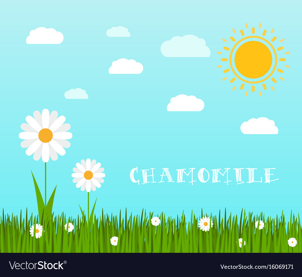 Spring green grass with chamomile landscape