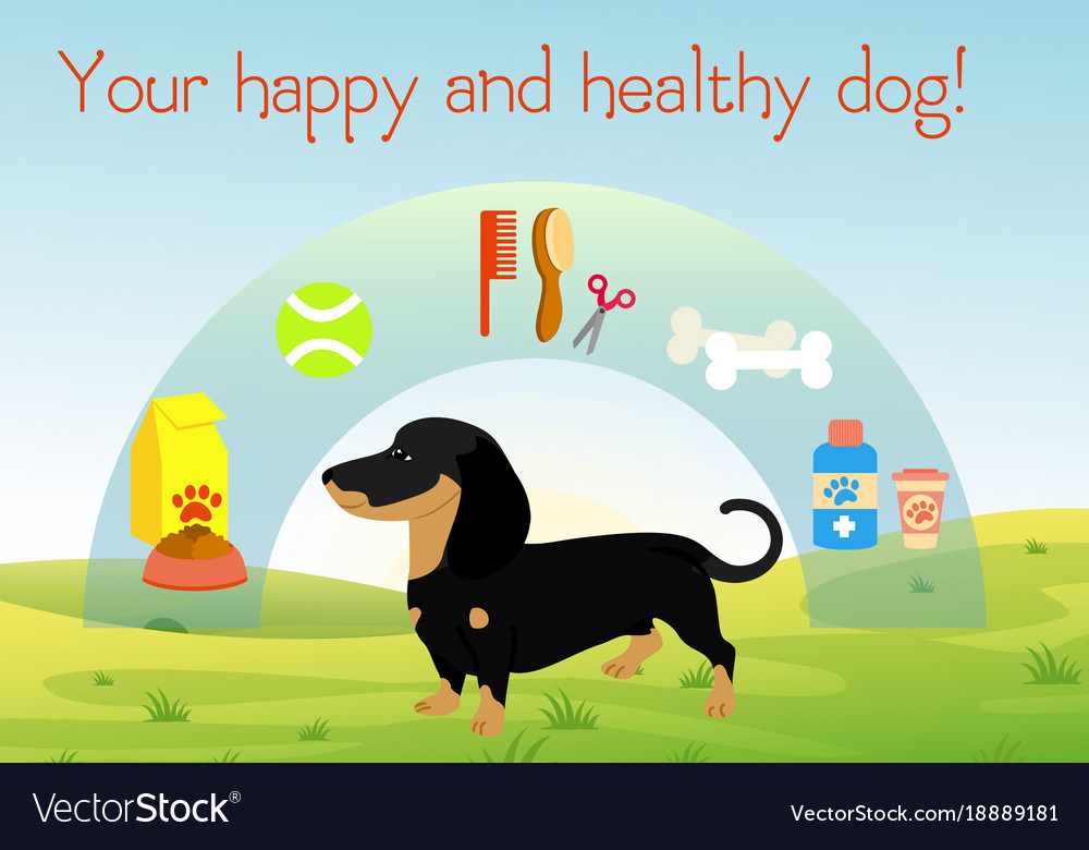 Dog on green grass with set of