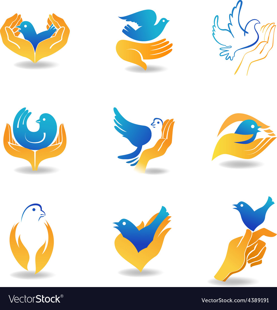 Bird in hands vector image