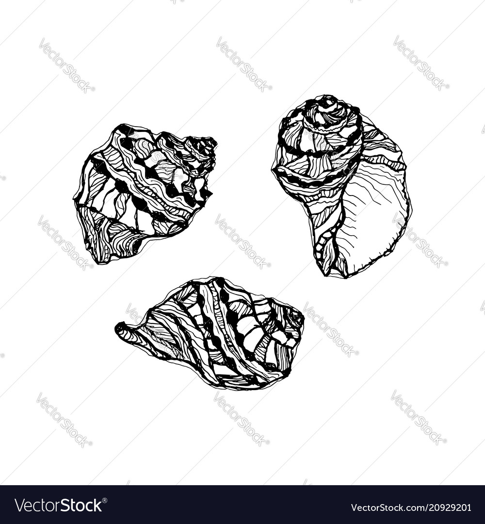 Seashell set hand drawn of sketch sea shell