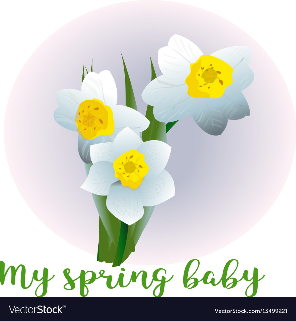 Spring flower narcissus for newborn