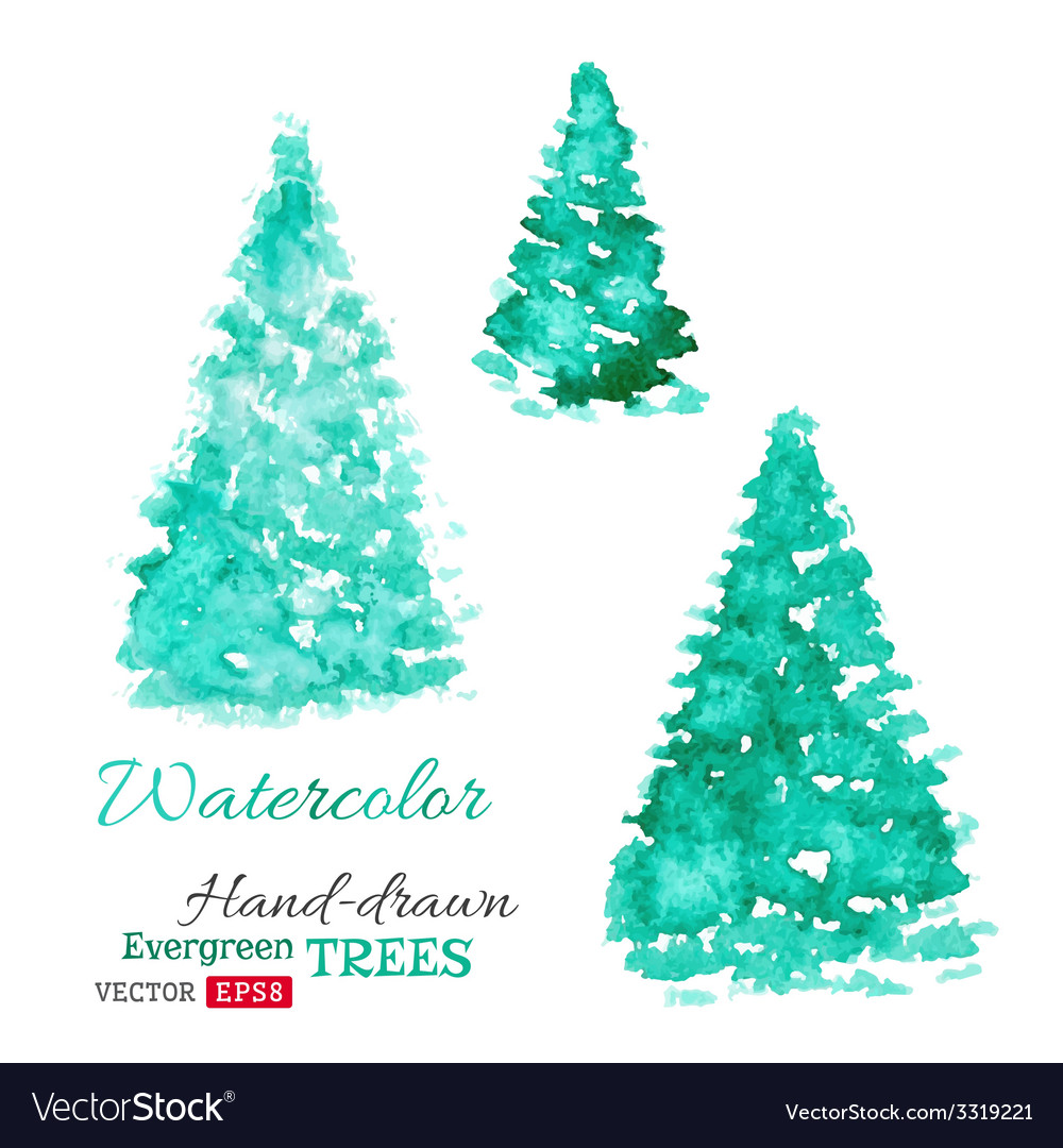 Watercolor evergreen trees vector image