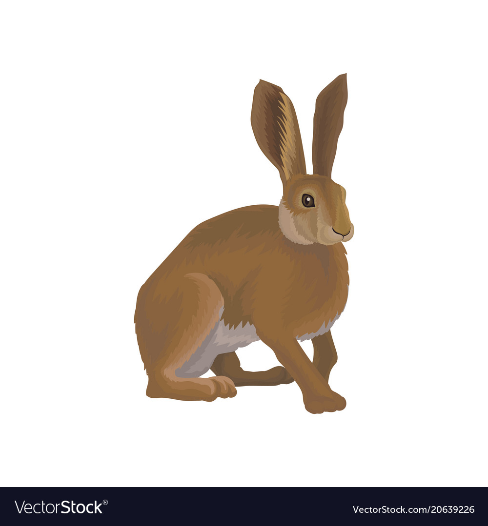 Hare wild northern forest animal