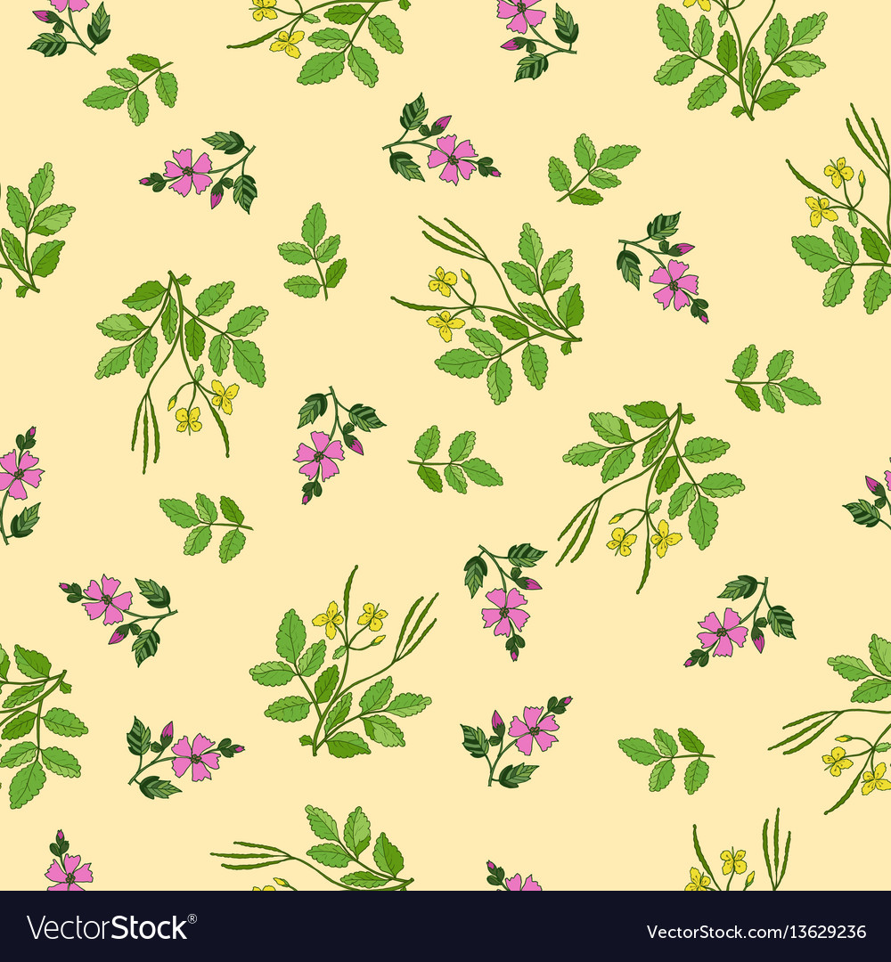Seamless pattern with hand drawn medicinal plants vector image on  VectorStock