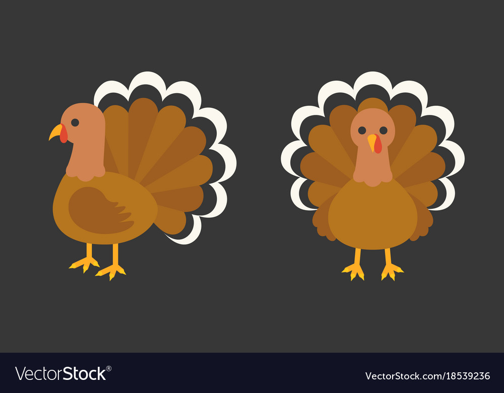 Turkey in front and side view
