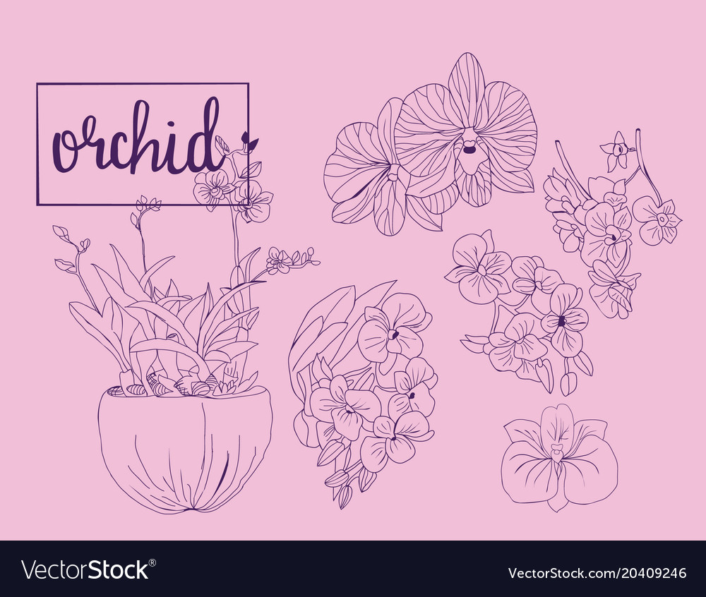 Hand drawn sketch collection of orchid flowers in vector image