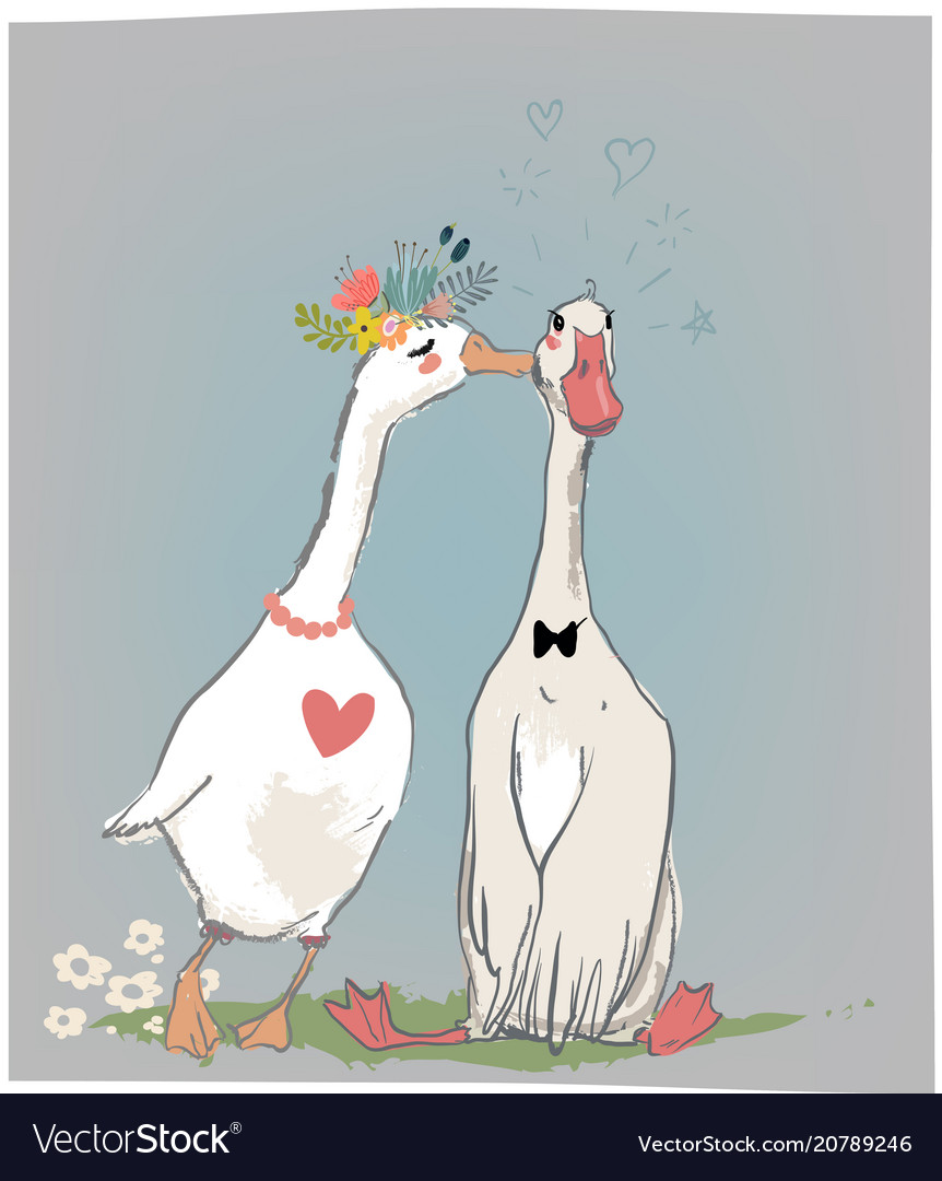 Vedding couple of farm birds vector image