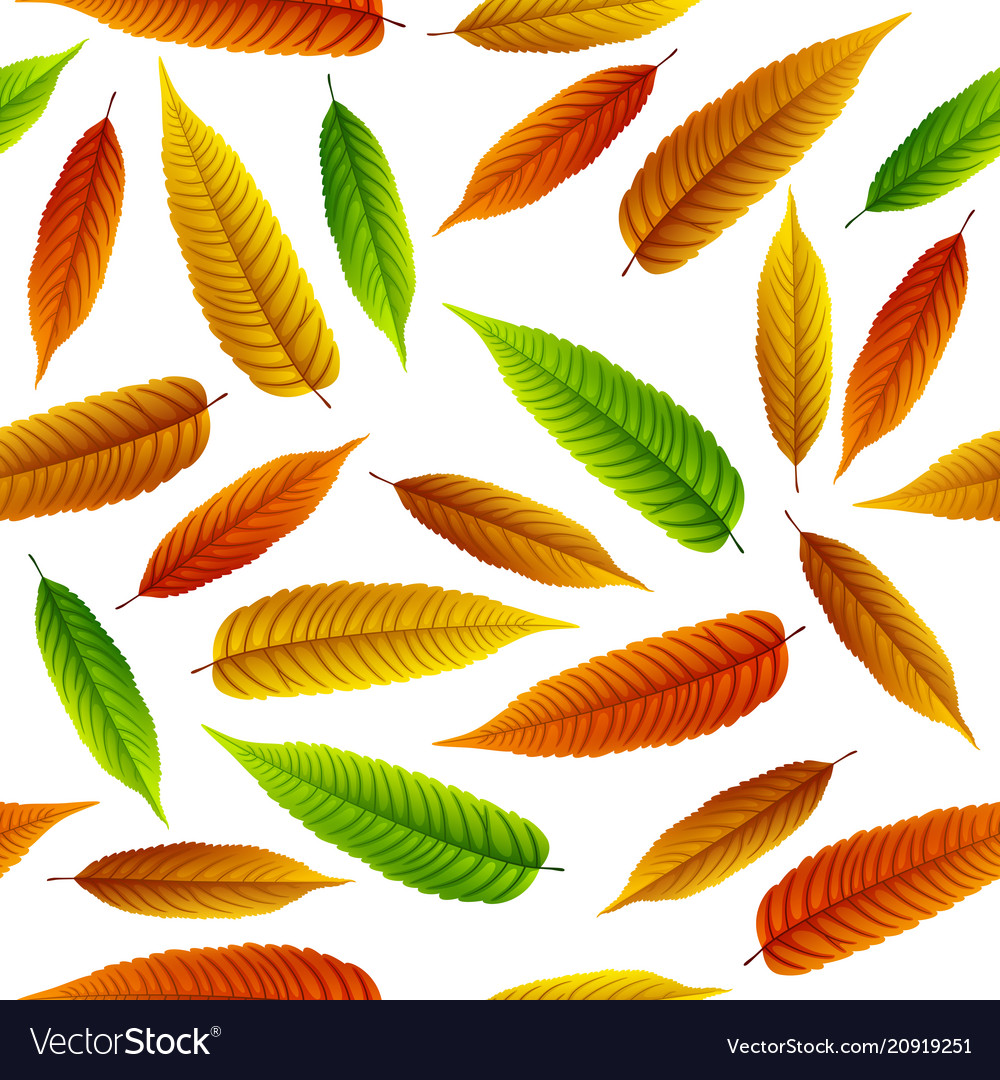 Colorful rowan leaves isolated on white background