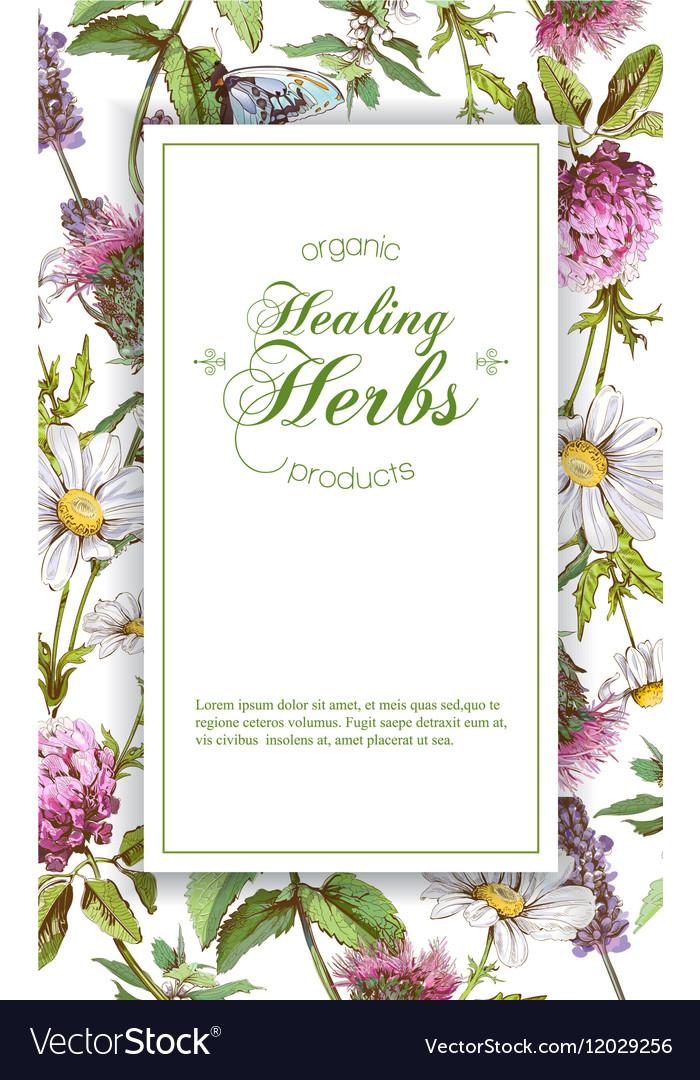Herbal Banner Royalty Free Vector Image Vectorstock