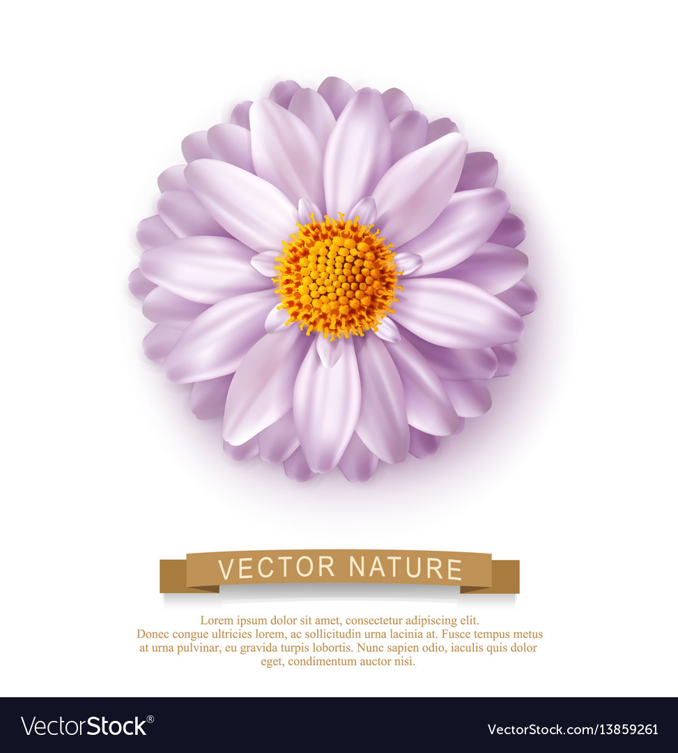 Pink flower isolated on white background element vector image