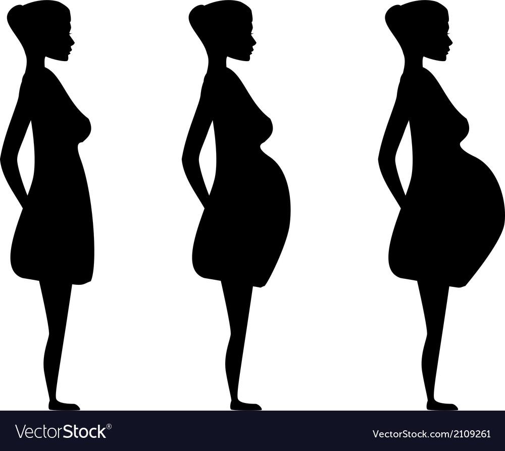 Pregnancy three trimesters of 24.5. Human
