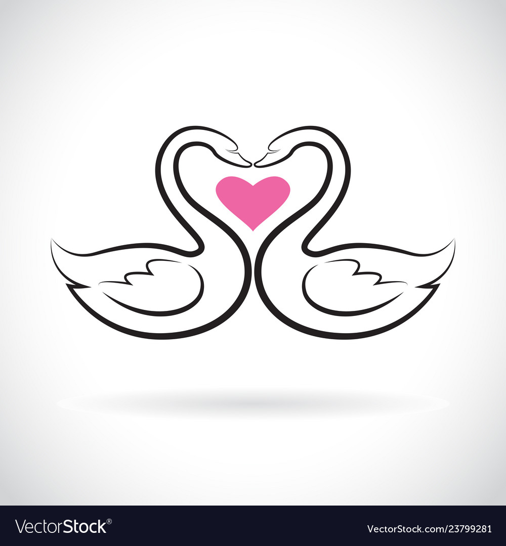 Two loving swans and pink heart on white