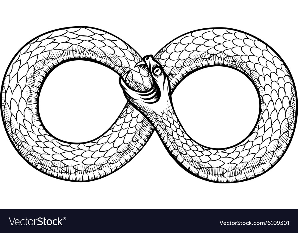 Snake curled in infinity ring Ouroboros devouring vector image